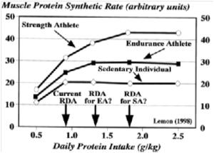 Diagramme - Prise optimale de protéine